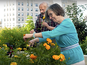 Two residents on the rooftop garden trimming flowers