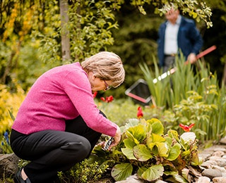 Older adult woman gardening with spouse.